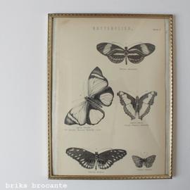 fotolijstje Jyden - bol glas - met prent vlinders