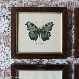 ingelijste prent vlinder - Pavone diurno