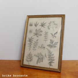 fotolijstje Jyden - bol glas - met prent bladeren