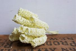 Spiraalbloem - Crème (set 10 stuks)