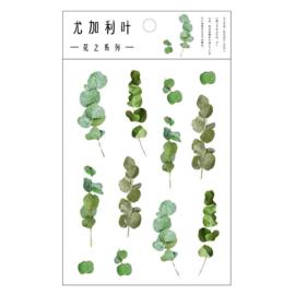 Transparant Stickervel - Eucalyptus