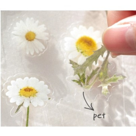 Transparant Stickervel - Madeliefjes