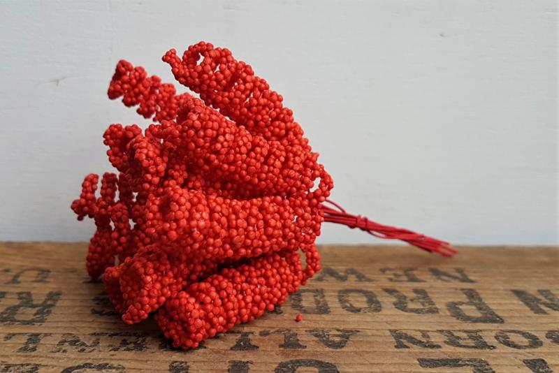 Spiraalbloem - Rood (set 10 stuks)