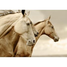 Sepia Horses A1