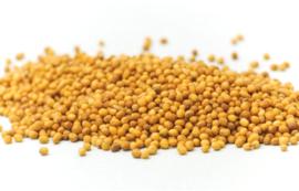 Bai Jie Zi - Semen Sinapis Albae - Mustard Seed 100gr