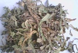 Che Qian Cao - Herba Plantaginis - Plantain herb 100 gr