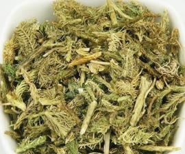 Shen jin Cao  -  Herba Lycopodii - 伸筋草 - Common Clubmoss Herb - 100 gr