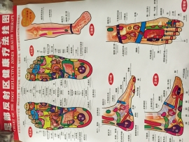 Chart of the foot reflective zones health therapy (middel)
