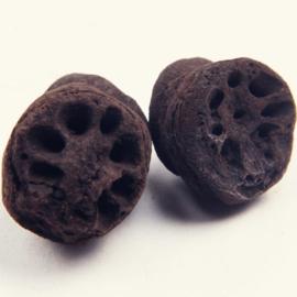 Ou Jie Tan -  Nodus Nelumbinis Rhizomatis Preparata - Lotus Rhizome Node Prepared 100gr