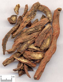 Dan shen - Radix salviae miltiorrhizae - Salvia root 100 gram