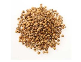 yi yi ren (Chao) - Semen coicis - coix seed Preparate - 薏苡仁(炒) 100 GR