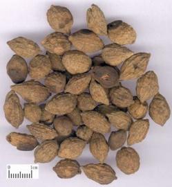 Yi Zhi Ren - Fructus Alpiniae Oxyphyllae - Sharpleaf Glangal Fruit - 100gr