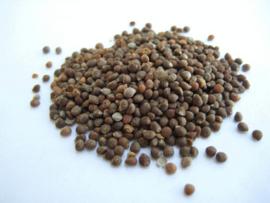 Zi Su Zi - Fructus Perillae - Perilla Seed - 100gr