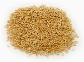Fu xiao mai - Fructus tritici lives - Wheat levis - 100gr