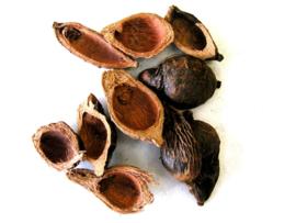 Da Fu Pi - Pericarpium Arecae - Areca Peel 100gr