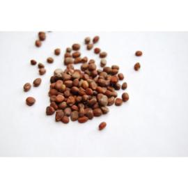 Lai Fu Zi - Semen Raphani - Radish Seed 100gr