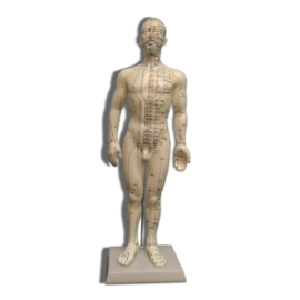 Acupunctuur Pop 50CM Man
