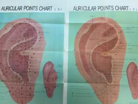 Auri cular points chart