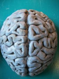 Dyslexie begrijpen en het lezende brein van kinderen