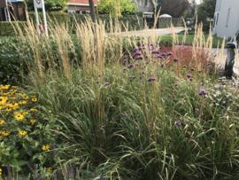 Overige grassen