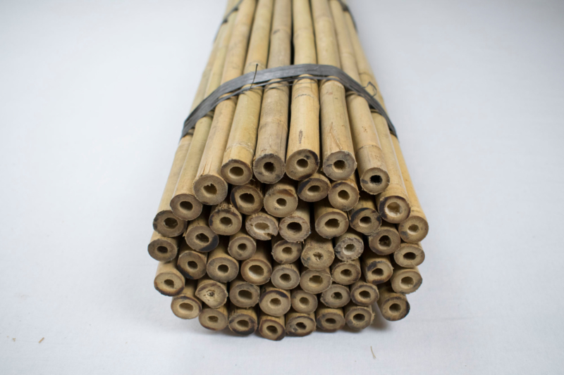 Bamboestok - Tonkinstok - lengte 61 cm per 100 stuks