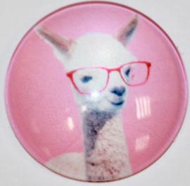 Glas cabochon 25mm: lama-met bril