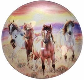 Glas cabochon 25mm: Paarden