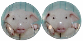 Glas flatback cabochon 12 mm varken, 2 stuks