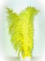 Veer spadonis geel 50cm
