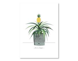 Poster Ananas Champaca