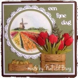 Tulpenvelden met Nel v/d Burg