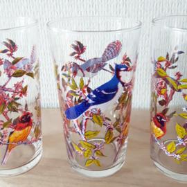 Glazen met vogels