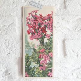 Set plaatjes vetplanten