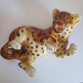 Beeld spelend luipaard