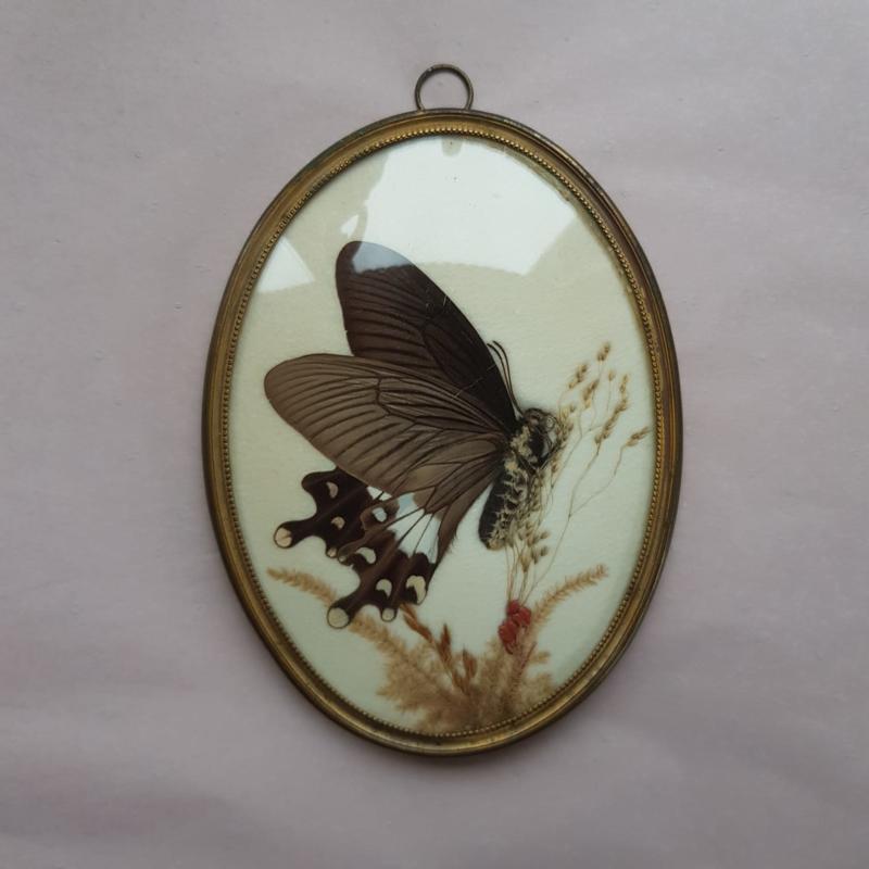 Vlinder in ovaal messing lijstje