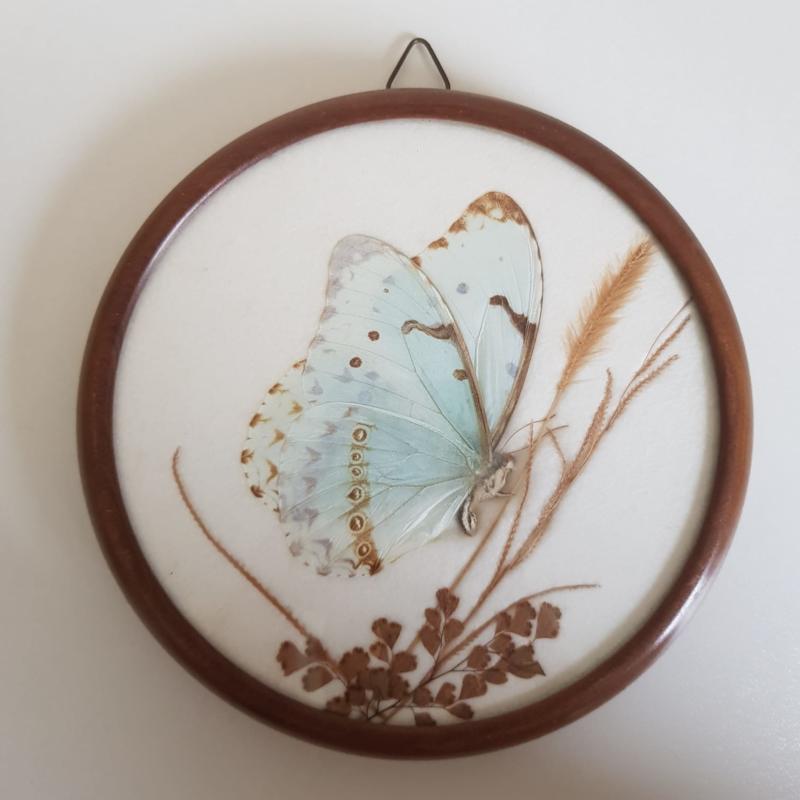 Vlinder in houten lijstje