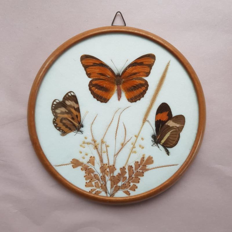 Lijstje van hout met vlinders