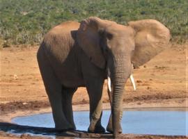 Olifant als krachtdier