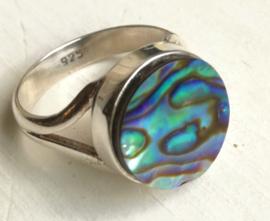 Ring Abalone schelp