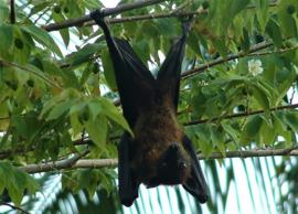 Vleermuis als krachtdier