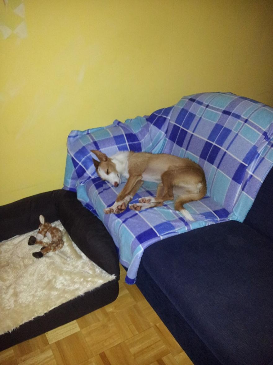 In dezelfde houding slapen