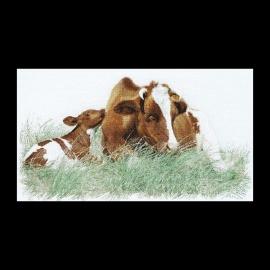 Rood bonte koe 449