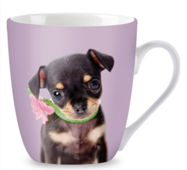 Mok | Chihuahua