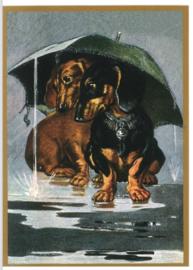 Teckelkaart | Teckels onder de paraplu