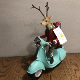 Rendier op Scooter