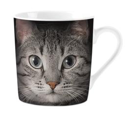 Mok | Grey Cat's Eyes