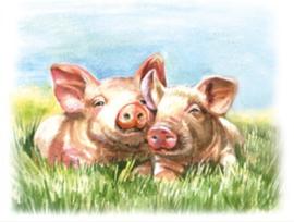 Kaart | Varkens in het gras