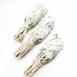 Witte Salie tulp smudge