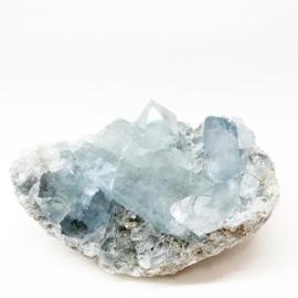 Blauwe Celestien L