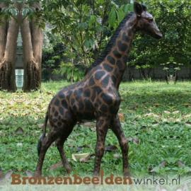 Bronzen giraffe BBWB860